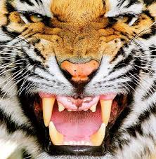 tom clancy teeth of the tiger