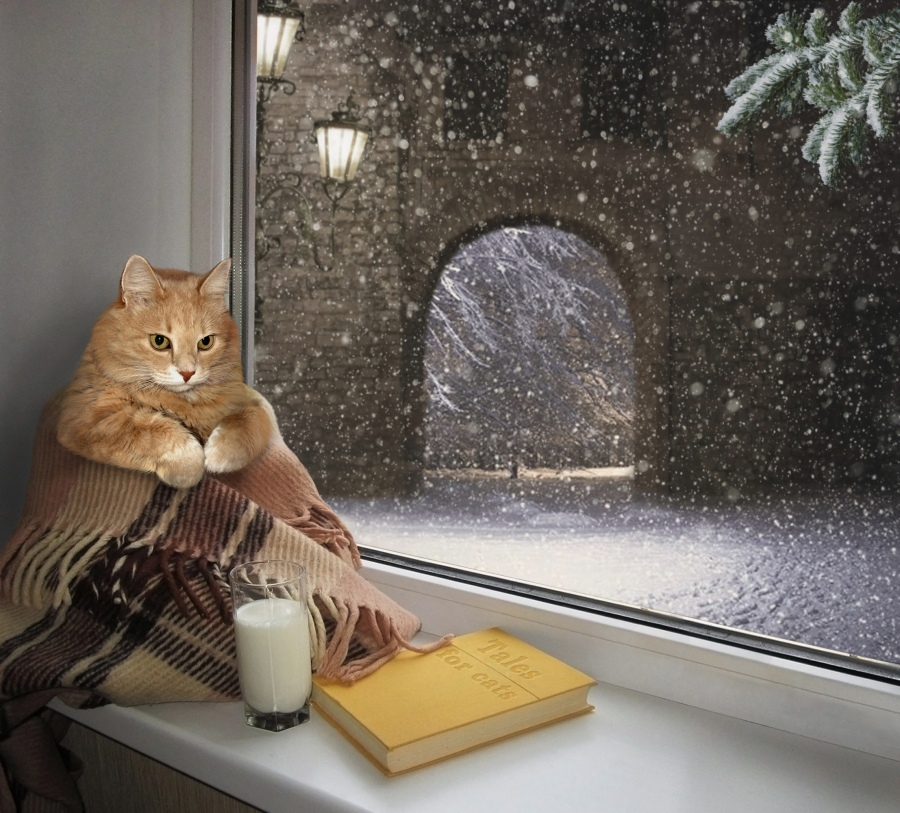 winter storm cat book